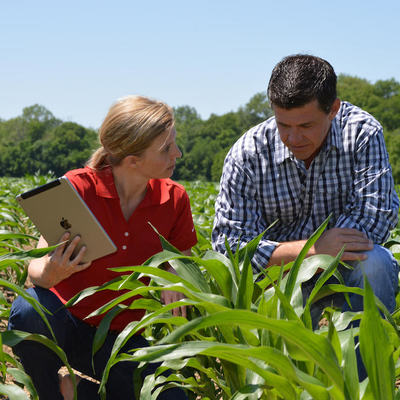 What is required to get an Agronomist job in the UK?