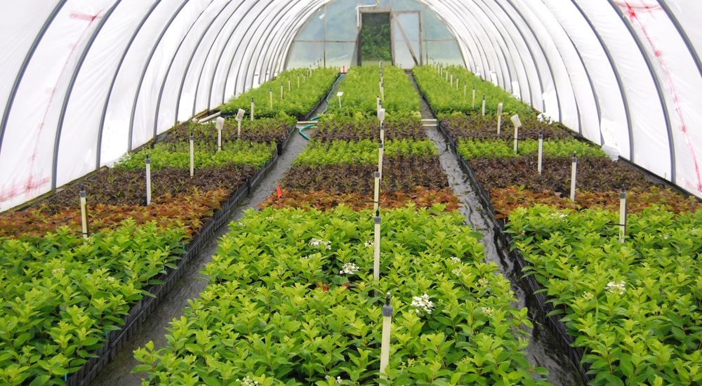 Horticulture – The Agriculture of Plants. How much do you know?